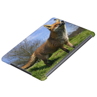 UK, England. Red Fox Vulpes vulpes) in iPad Air Cover