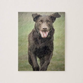 UK, England, Suffolk, Thetford Forest, Black dog Jigsaw Puzzle