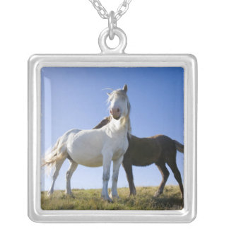 UK, Wales, Brecon Beacons NP. Wild Pony Silver Plated Necklace