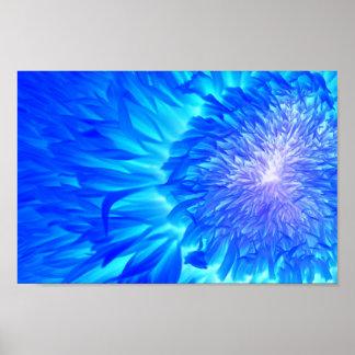 Ultraviolet Dahlia by Prairie Pics Poster