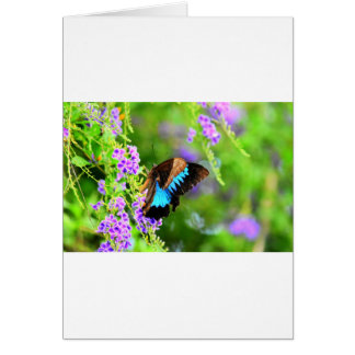 ULYSSES BUTTERFLY QUEENSLAND AUSTRALIA CARD