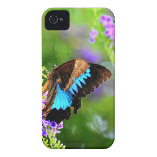 ULYSSES BUTTERFLY QUEENSLAND AUSTRALIA Case-Mate iPhone 4 CASE