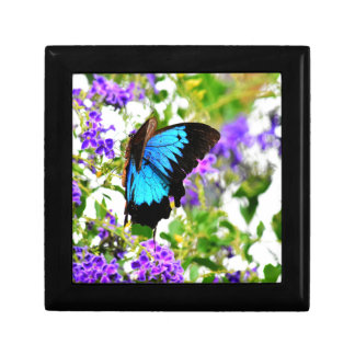 ULYSSES BUTTERFLY QUEENSLAND AUSTRALIA GIFT BOX