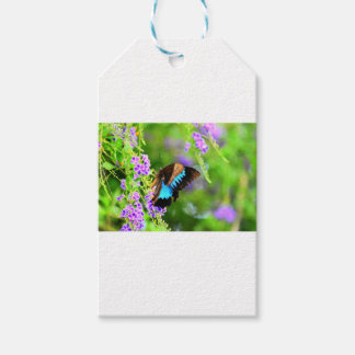 ULYSSES BUTTERFLY QUEENSLAND AUSTRALIA GIFT TAGS