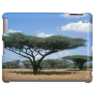 Umbrella Thorn Acacia (Acacia tortilis), Mkuze