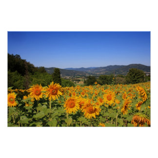 Umbrian Countryside - Italy Print