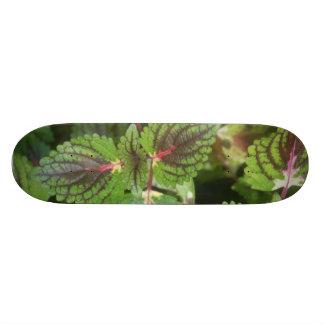 Ummm Leafy Custom Skateboard