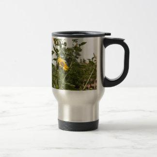 Un beau tournesol se levant haut tasse à café