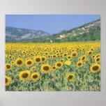 un champ des tournesols posters