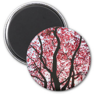 Under A Pink Weeping Willow Tree Magnet
