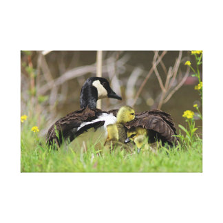 Under Mama Goose's Wing Canvas Print