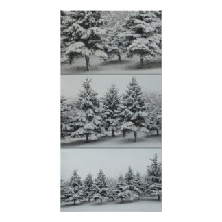 Under the snow. Spruce. Approximation Poster
