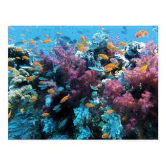 Under water Coral and Fish Postcard