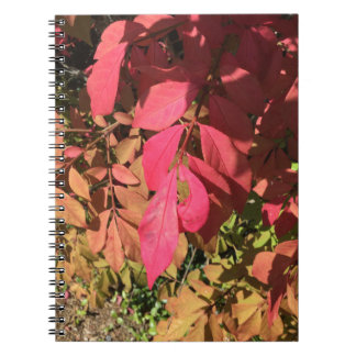 Underexposed Notebooks