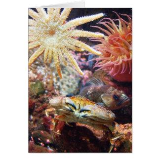 Undersea Card