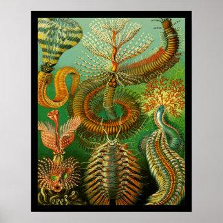 Undersea Color Poster