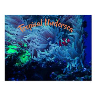 Undersea Life Postcard