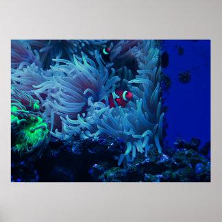 Undersea Life Poster