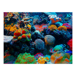 Undersea Tropical Coral Reef Poster