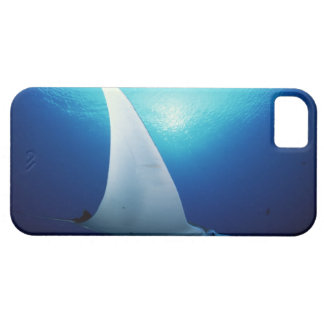 Underside of a manta ray iPhone 5 case