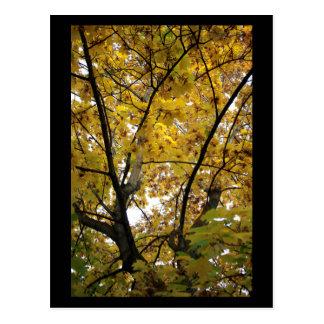Underside of Yellow Leaves in Fall Mini Print Postcard