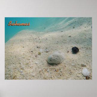 Underwater Bahamas Poster