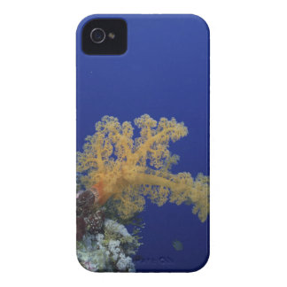Underwater Coral iPhone 4 Covers