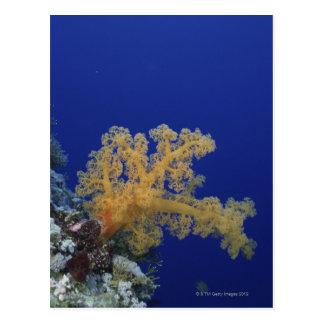 Underwater Coral Postcard