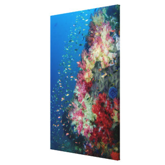 Underwater coral reef, Indonesia Canvas Print
