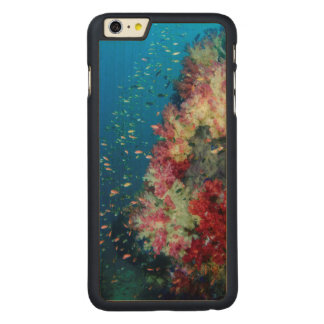 Underwater coral reef, Indonesia Carved Maple iPhone 6 Plus Case