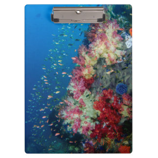 Underwater coral reef, Indonesia Clipboards