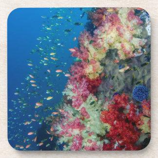 Underwater coral reef, Indonesia Drink Coasters