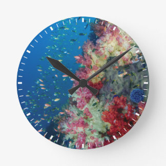 Underwater coral reef, Indonesia Round Clock