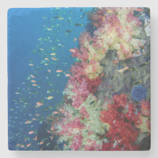Underwater coral reef, Indonesia Stone Coaster