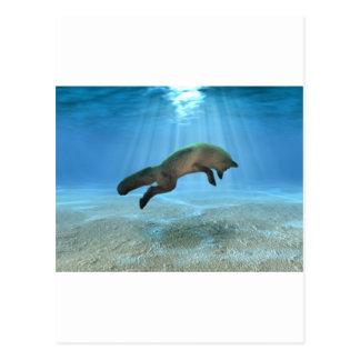 Underwater Fox Postcard