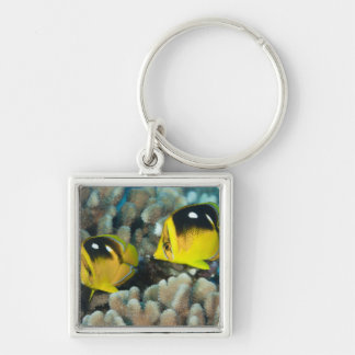 Underwater Life; FISH:  A pair of Fourspot Silver-Colored Square Keychain