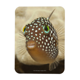 Underwater life; FISH:  Close-up portrait of a Magnet