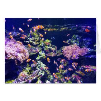 Underwater Orange Clown Fish Around Coral Card