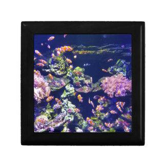 Underwater Orange Clown Fish Around Coral Gift Box