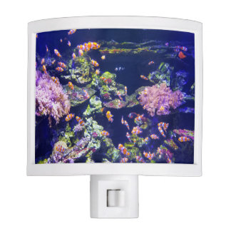 Underwater Orange Clown Fish Around Coral Nite Lite