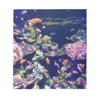 Underwater Orange Clown Fish Around Coral Notepad