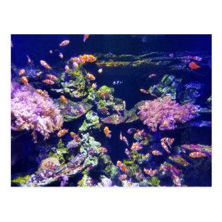 Underwater Orange Clown Fish Around Coral Postcard
