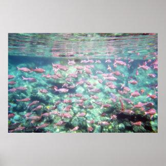 Underwater School of Fish Poster Print