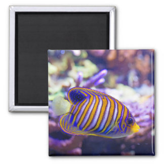 Underwater Sea Butterfly Yellow Fish Magnet