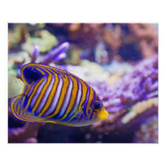 Underwater Sea Butterfly Yellow Fish Poster