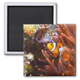 Underwater Sea Clownfish Wildlife Magnet
