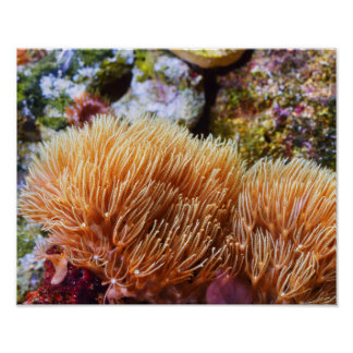 Underwater Sea Coral Poster