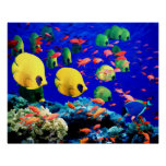 Underwater Sea Coral & Tropical Fish Posters