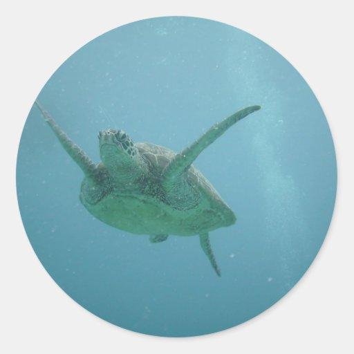 Underwater Sea Turtle Round Sticker