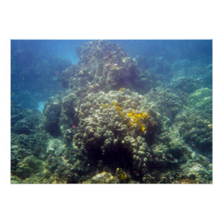 Underwater Sealife Photography Poster Print